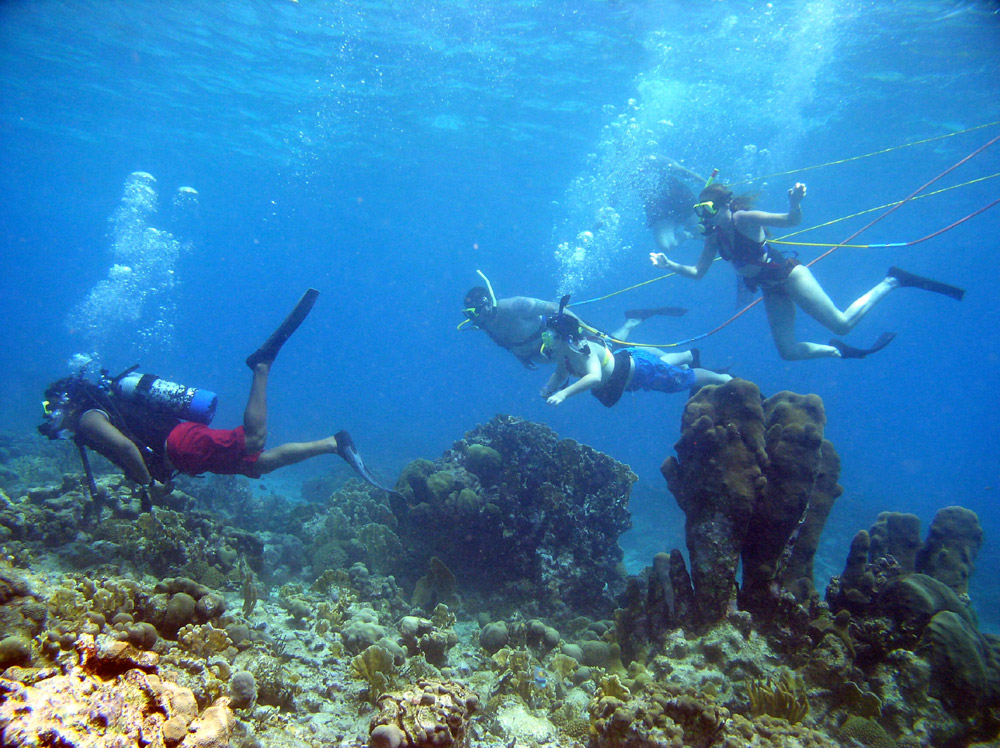 Key West Snorkeling, SNUBA, Scuba Diving Excursions, & Training by PADI