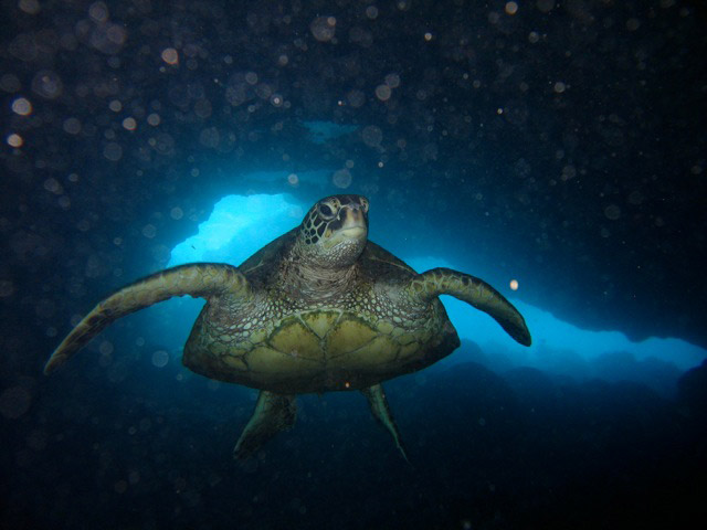 Underwater Photo Package Key West