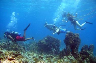 Diving Key West