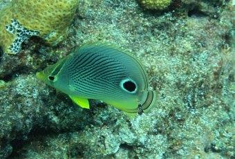 Underwater Sea-Life Key West