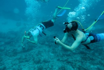 Key West Fish Key West