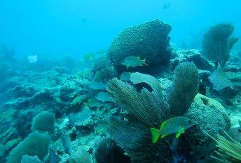 Key West Coral Key West