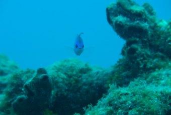 Florida Reefs Key West
