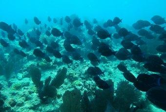 Florida Coral Key West