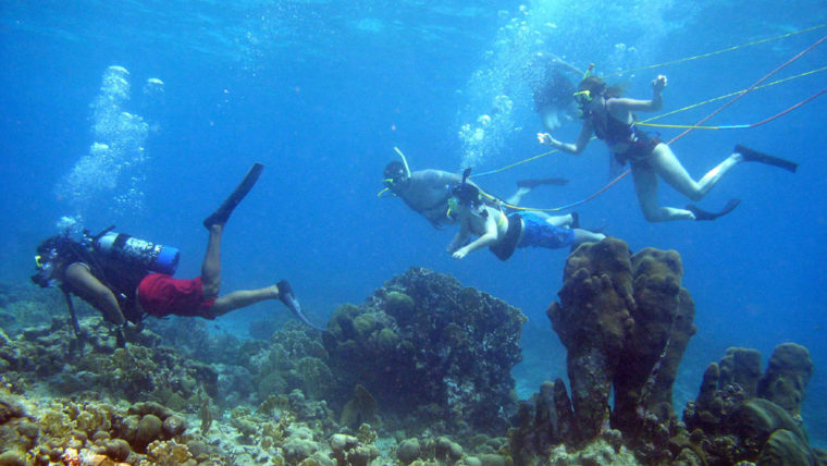 Coral Reef Snorkeling, Coral Reef Cruise and Coral Reef Tours in Key West