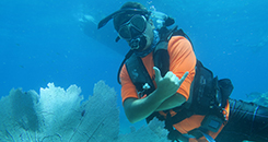 Diving, Dive Training, Diving Excursions, and Diving Instructions in Key West