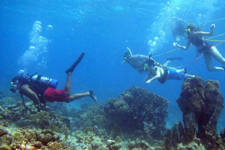 Coral Reef in Key West