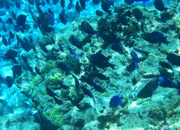 Coral Reef Snorkeling, Coral Reef Tours, and Snorkeling in Key West
