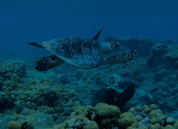 Coral Reef Tours in Key West