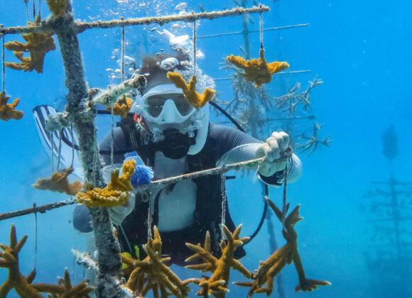 Snorkeling Adventure in Key West