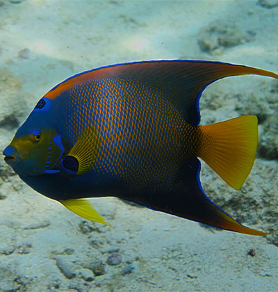 Tropical Fish Tour in Key West, FL